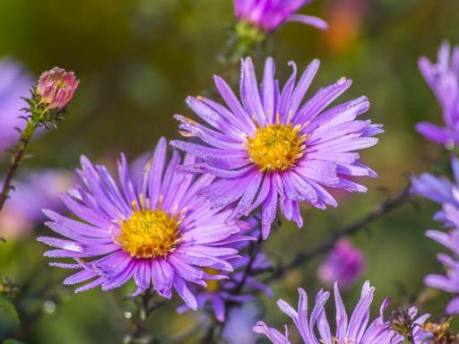 ASTER x 'Glow in the Dark'
